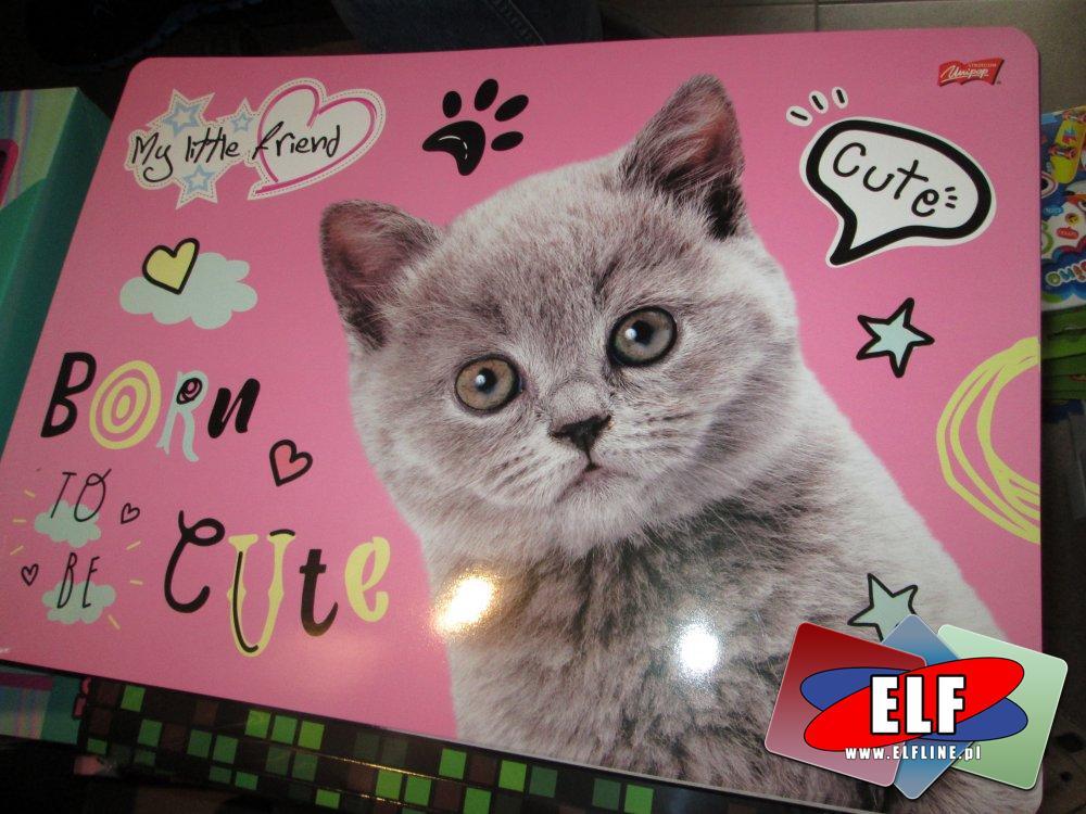 Teczka, Teczki, Dla dzieci, Słodki kotek