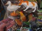 Zwierzęta, zabawki w woreczkach, zabawka