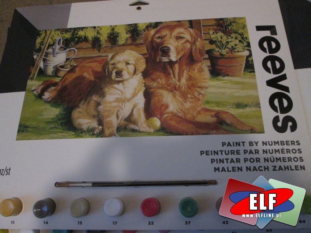 Reeves, Zestawy malowania, zestawy do nauki malowania