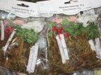 dp Craft, Ozdoby w woreczkach, Guziki drewniane mix, Naturalne elementy, Naklejki z pianki, Kora, Pompony tiulowe, Mech, Koraliki, Kwiaty papierowe, Kształty papierowe, Rzepy samoprzylepne, i inne ozdoby w woreczkach